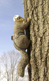 Experts in tree climbing